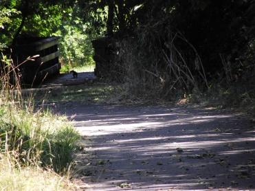 Weird Animal walking down the path